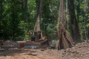 Logging in Guyana by Andrew Snyder