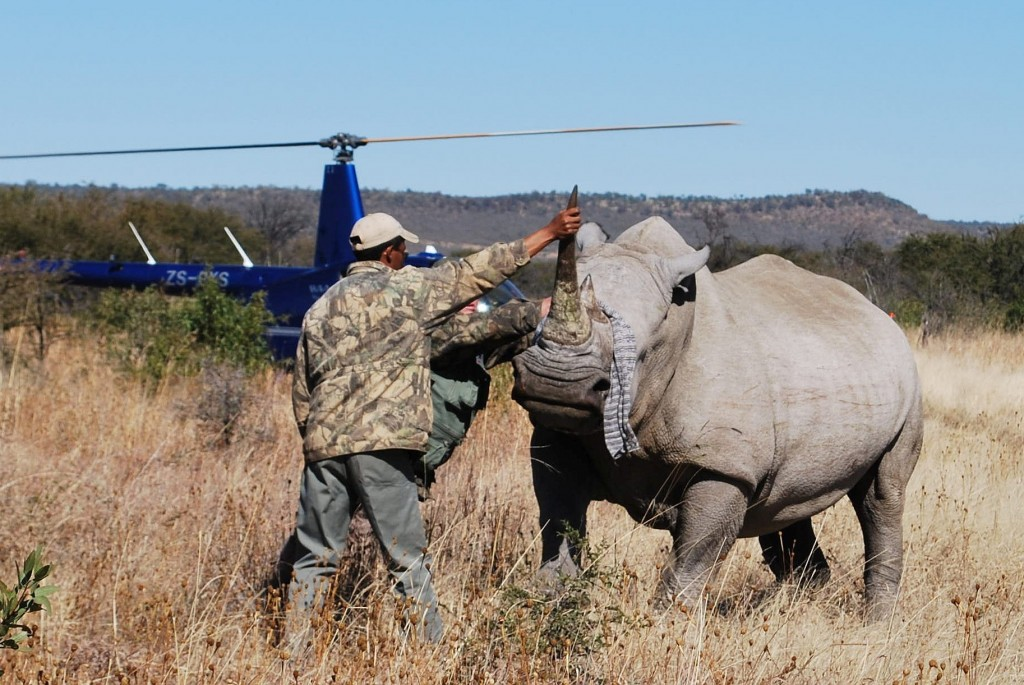 Rhino by Intel Free Press