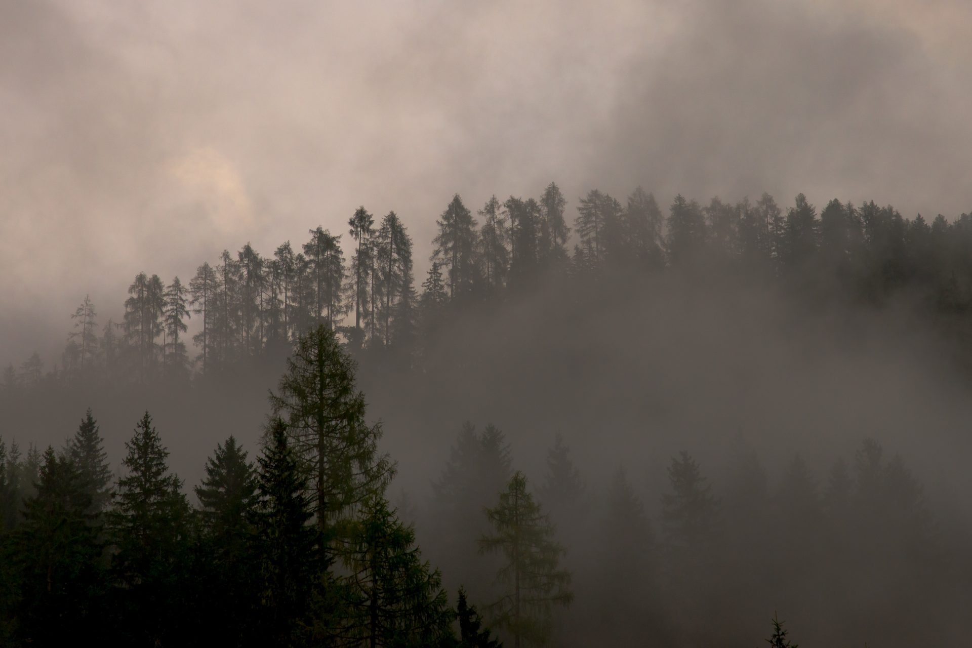 View of forest through a haze of smoke