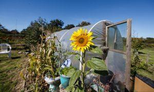 Kent Community Oasis Garden is now open