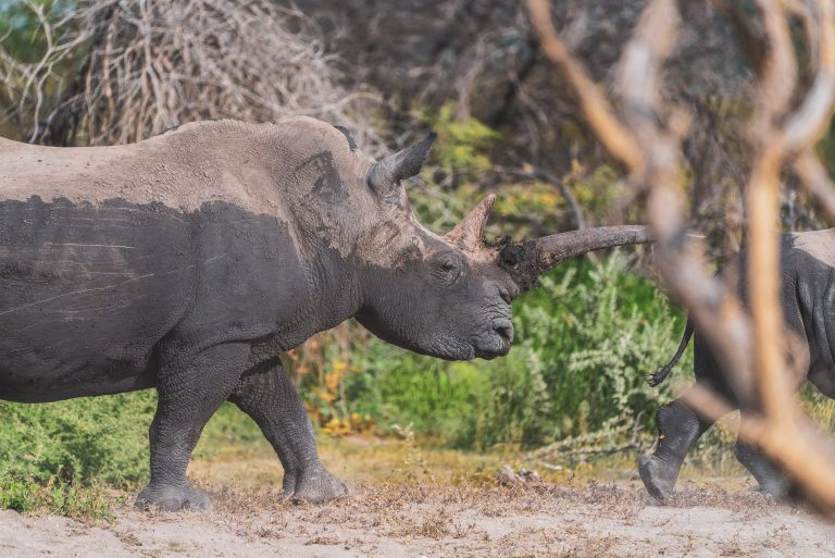 Namibia records reduction in rhino poaching despite strains caused by Covid-19