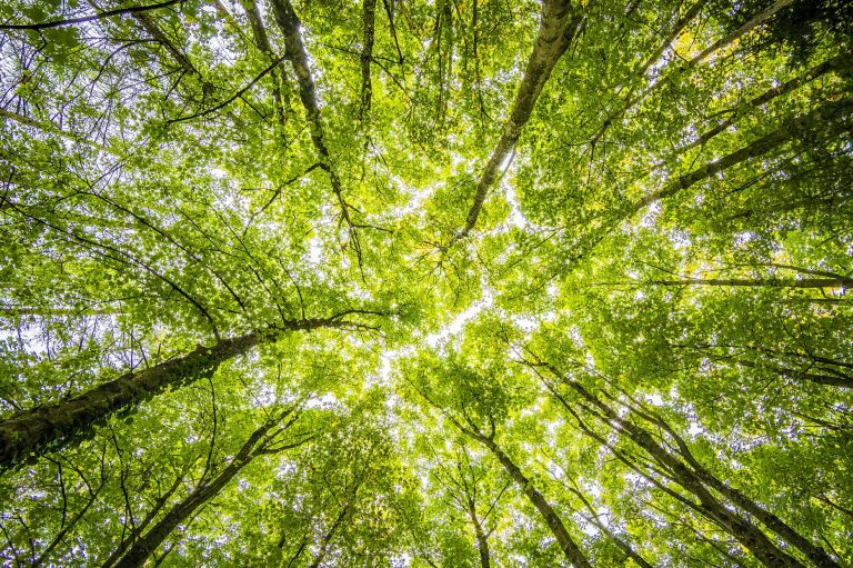 National narcissists more likely to support greenwashing to improve nation's image