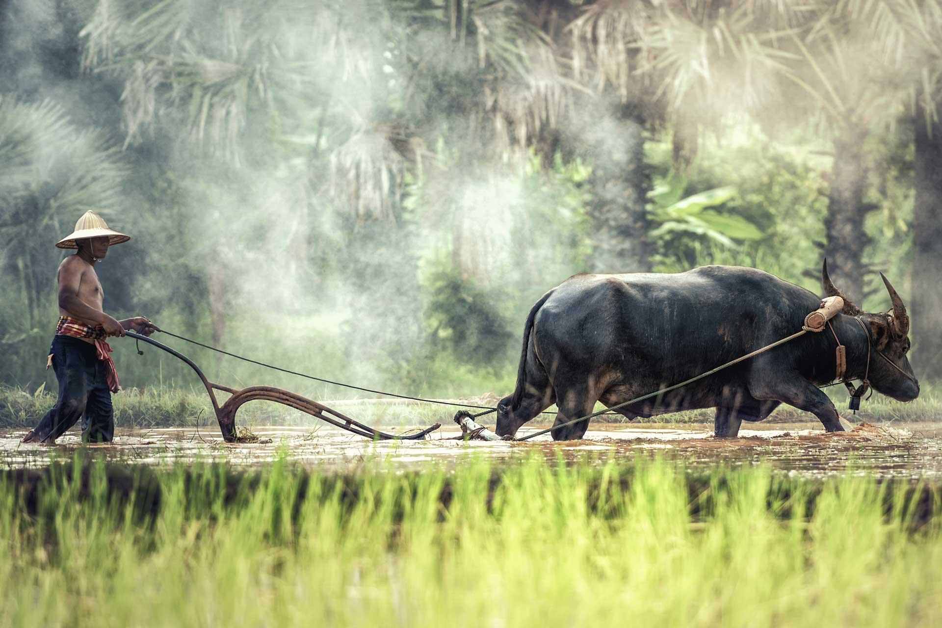 Image representing Environmental Anthropology